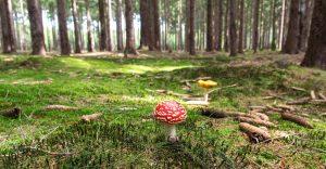 produits naturels champignon